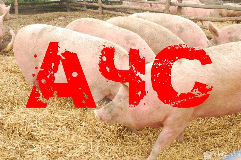 Африканська чума свиней – це небезпечно!